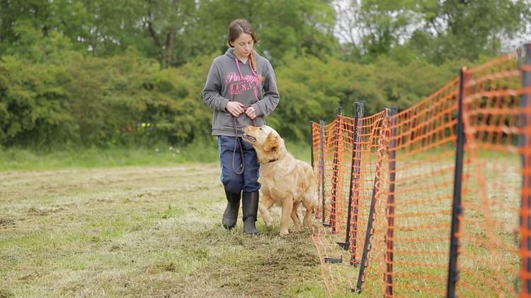 dog training video