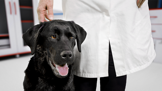 Sealwise Veterinary Sector